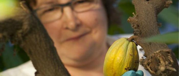 Centro Internacional de Cuarentena del Cacao