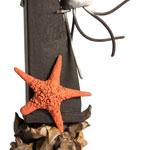 detalle estrella de mar de Sergi Vela