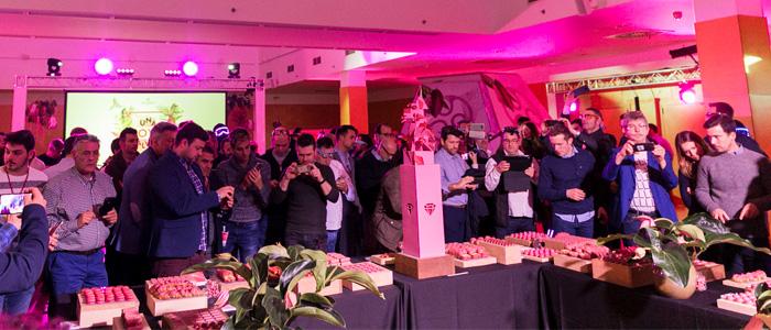 Presentación de Ruby de Callebaut