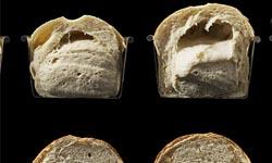 Fases de horneado de un pan