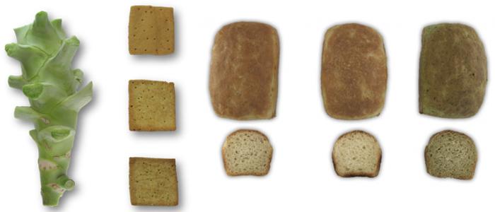 DIferentes ejemplos de pan con brócoli