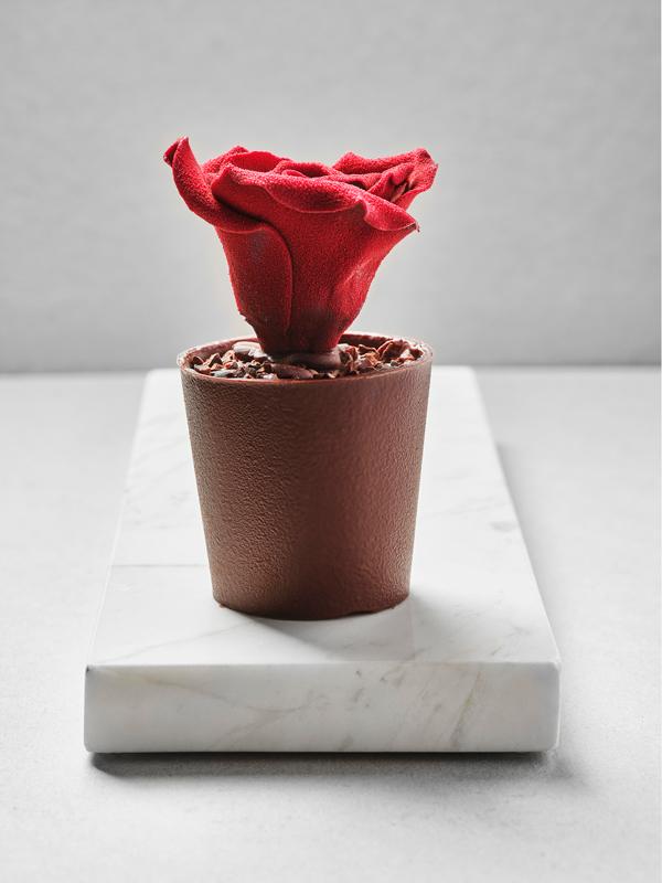 Vista frontal de la Rosa de Casa Cacao