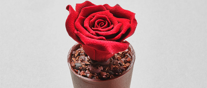 Rosa de Sant Jordi de Casa Cacao