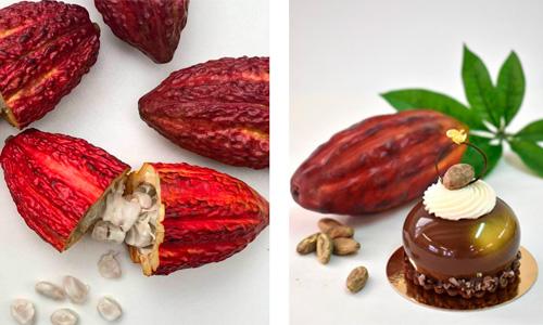 imagen de Dirafrost - puré de pulpa de cacao
