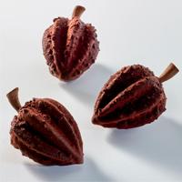 Haba de cacao de Miquel Guarro