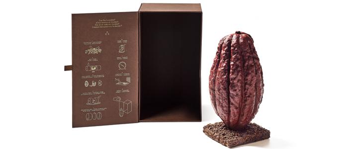 Haba de cacao de Casa Cacao