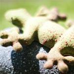 El típico tritón del Montseny, convertido en chocolate en alusión a una iniciativa solidaria de la comarca