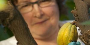 Imagen de En Reino Unido ponen el cacao en cuarentena para salvar el futuro del chocolate