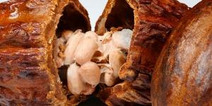 Imagen de El cambio climático afecta al precio del cacao