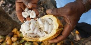 Imagen de La venta de cacao de comercio justo se dispara en cinco años
