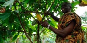 Imagen de Compañías de chocolate y cacao se unen para actuar ante al cambio climático