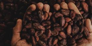 Imagen de El Foro del Cacao y Chocolate Latino centra su mirada en el impacto del coronavirus