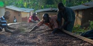 Imagen de Suchard se une al proyecto sostenible de Cocoa Life