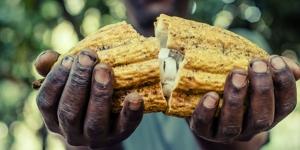 Imagen de Cacao Barry anuncia la sostenibilidad de sus chocolates
