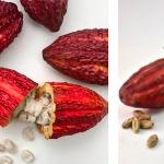 Dirafrost - puré de pulpa de cacao