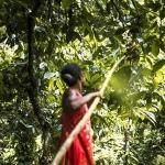 imagen de Millot 74%, chocolate ecológico de Madagascar