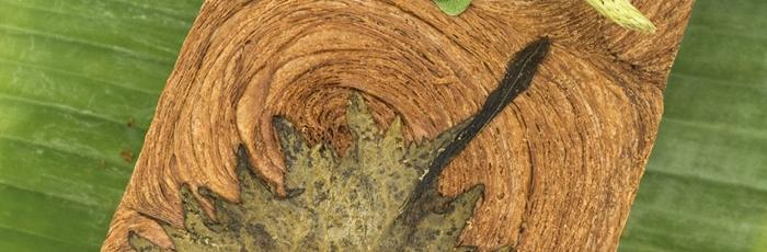 Tronco de brioche hojaldrado con crema de aguacate. Colectivo 21 Brix – The Green meeting